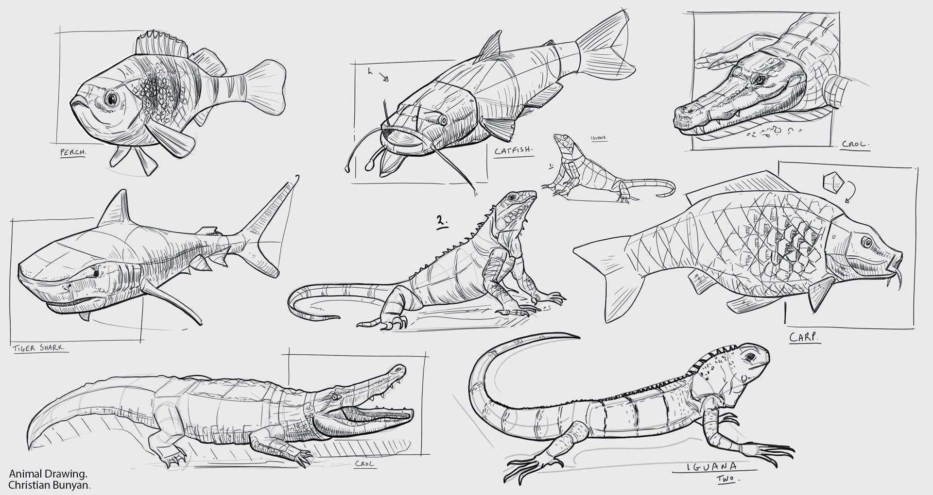 Example artwork – Drawing Animals Workshop 2020