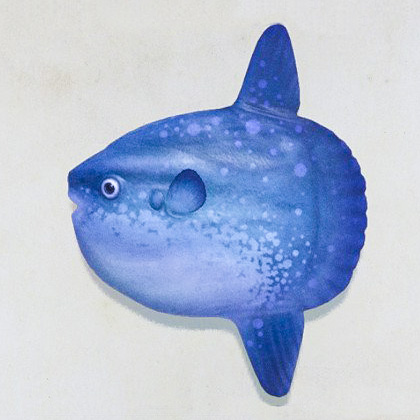 Class Image – Sunfish – click to view class details