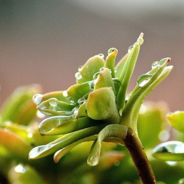 Class Image – Secret Life of Plants - Natalya Munro – click to view class details